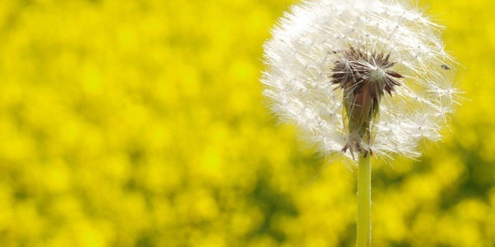 ¡Achus! Mejores aplicaciones para controlar el polen y otros alérgenos del ambiente