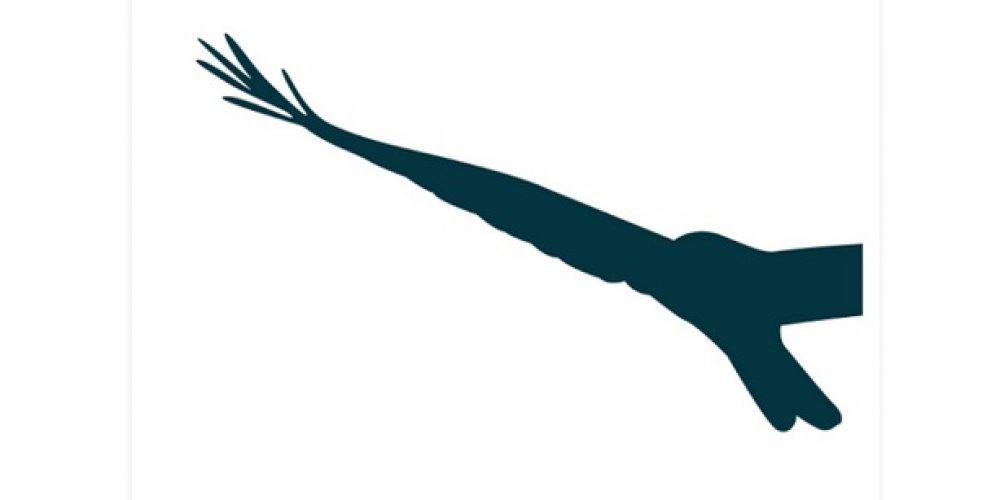 Yo cuando veo una abubilla lo llamo 'pájaro raro'. ¿Y tú?